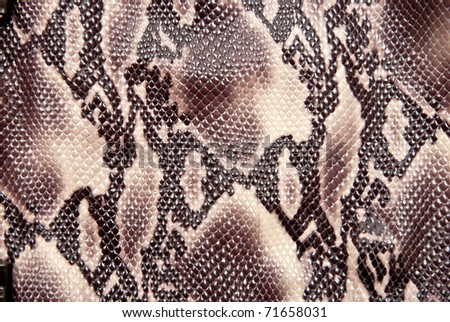 Texture background brown snake leather