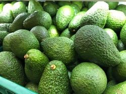 texture background of fresh large green Avocados. Seamless avocado pattern. Large berry containing a single seed, Very nutritious and contain a wide variety of nutrients.