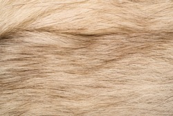 Texture background, pattern. Fox fur, Polar fox with valuable fur. gray color, and also the fur.
