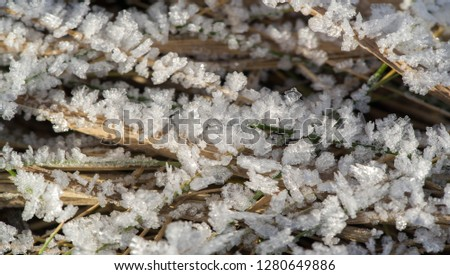 Texture background, pattern. Frost on the sprigs of grass. a deposit of small white ice crystals formed on the ground or other surfaces when the temperature falls below freezing. #1280649886