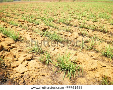 Texture background surface soil grass dry summer - stock photo