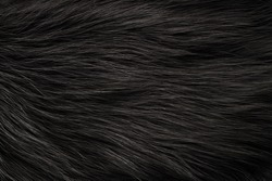 Texture black fox fur, high pile. Background