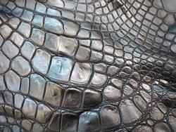 texture dark colored crocodile skin close up