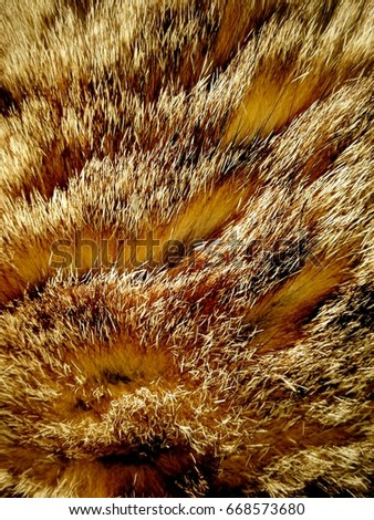 Texture from fur of the animal Zdjęcia stock ©