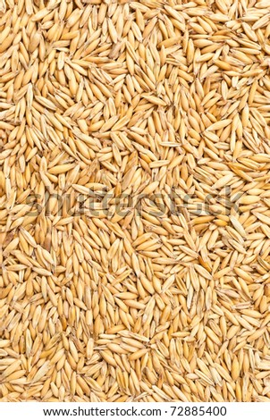texture from oat grains