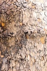 texture map / tree skin