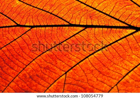 Texture of a dry leaf as background - stock photo
