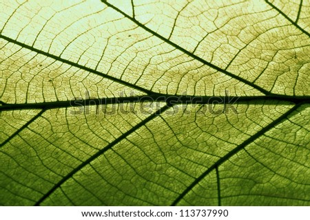 Texture of a dry leaf as background, paper color green