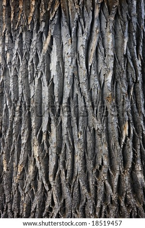 Tree Bark Pattern Fabric, Tree Bark Pattern Fabric Products, Tree