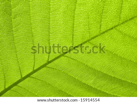 Texture of a green leaf in sunlight