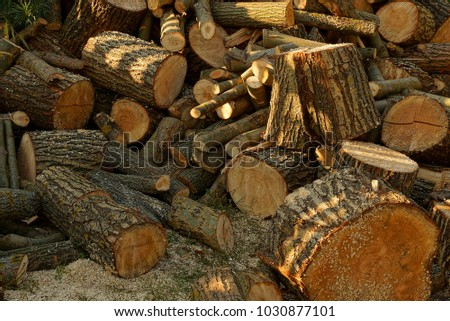 Texture of a pile of brown firewood and logs in the yard #1030877101