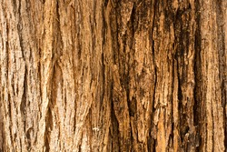 Texture of a trunk