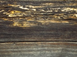 Texture of an old, brown wood closeup. Wall of wooden logs