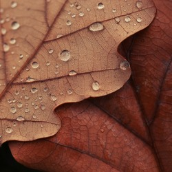 texture of autumn leaves with drops of water nature background
