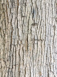 Texture of bark  in the natural park.