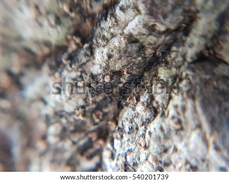 Texture of bark of tree use as natural background