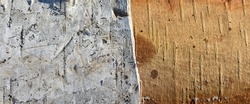 Texture of birch trunk, divided into two parts - with bark and without bark. Damage to trees by animals and insects. Close-up of part of tree with torn off top layer of bark. space for text