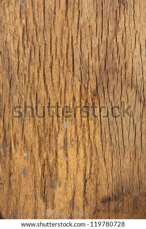 texture of brown tree