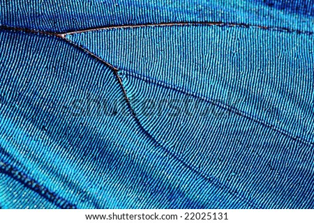 Texture of butterfly wing (blue morpho)