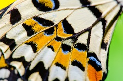 Texture of butterfly wing, Thailand.