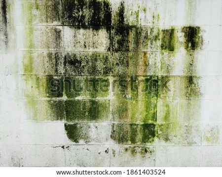 Texture of Concrete ,Moss on the wall,Moss texture. Moss background. Green moss on grunge texture, background.