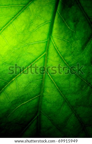 Texture of dark green leaf - stock photo