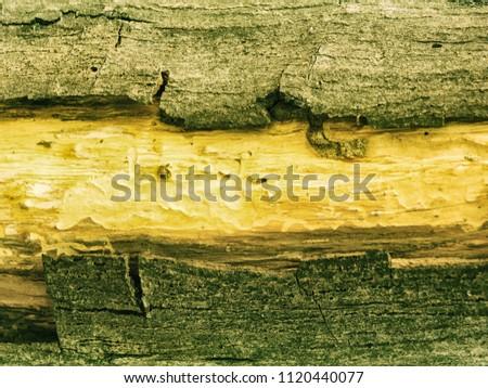 Texture of ebony. Wooden background #1120440077