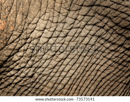 texture of elephant skin use for background