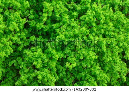 texture of foliage of trees, background green foliage #1432889882