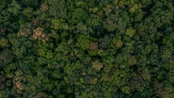 Texture of forest jungle, Background of forest wood, Aerial top view background tropical forest, Ecosystem and healthy environment concepts and background.