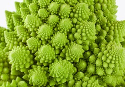 Texture of fresh romanesco broccoli cabbage, natural food background. Romanesco cabbage isolated on white.