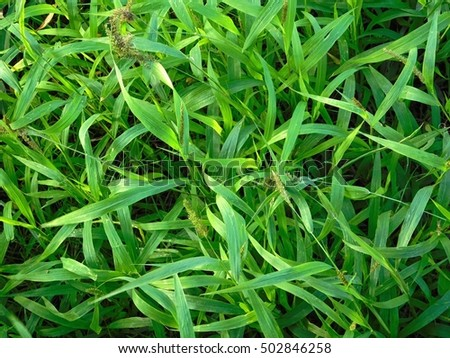 texture of grass lawn #502846258