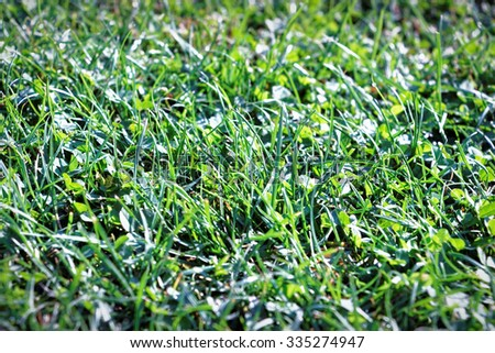 Texture of green grass. #335274947