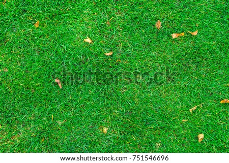 texture of green grass on the whole frame #751546696