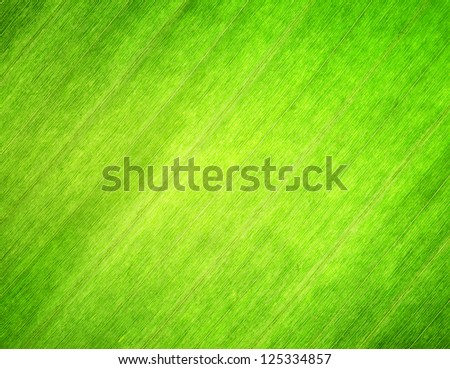 Texture of green leaf. Nature background.