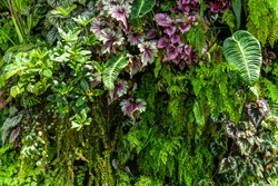 texture of living wall with vegetation