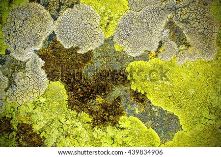 texture of moss, mold in stone, nature background
