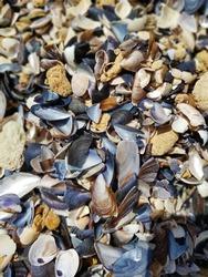 texture of multicolored broken shells