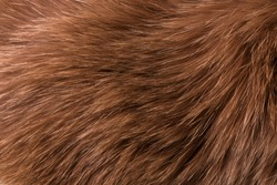 Texture of natural fur of a red fox, long pile, close-up. Texture background