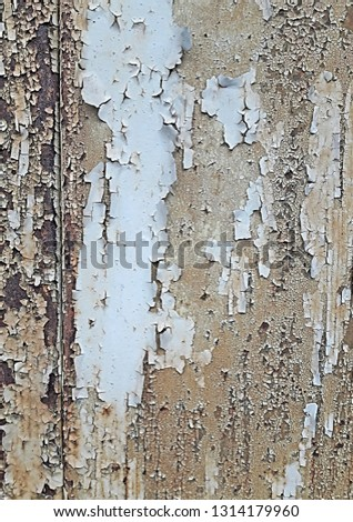 Texture of old damaged wood. Background of white cracked paint. #1314179960