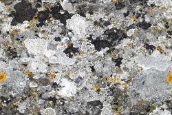 Texture of old limestone with lichen fragments, seamless. Paris, France