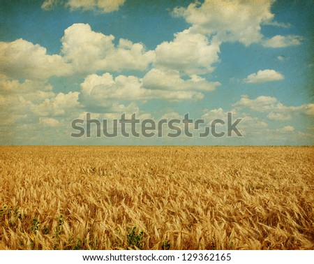 Texture of old paper. field of wheat with sunflowers #129362165