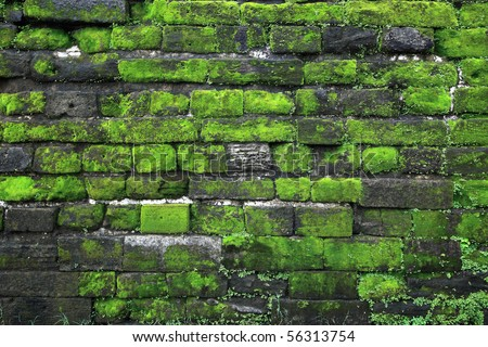 Texture of old stone wall covered green moss in Fort Rotterdam, Makassar - Indonesia