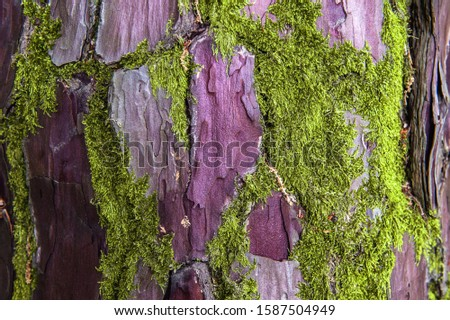 Texture of old wrinkled leathery wood. The tree bark is damaged by green moss bushes. Floral two-tone texture. Selective focus