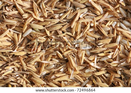 texture of paddy rice