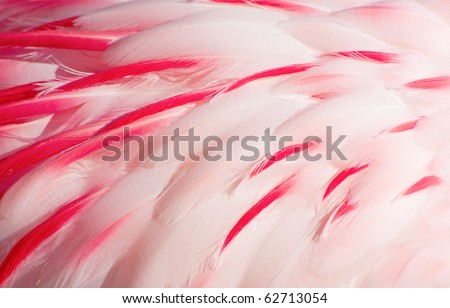 Texture of pink flamingo feathers