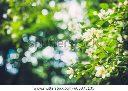 Texture of plants in summer #685375135