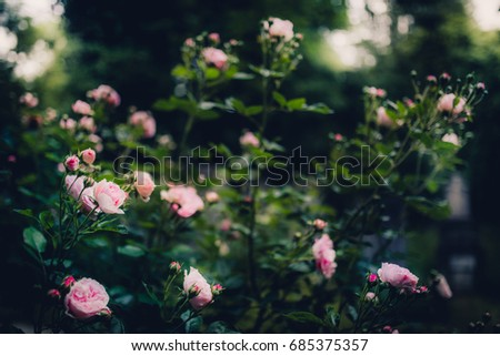 Texture of plants in summer #685375357