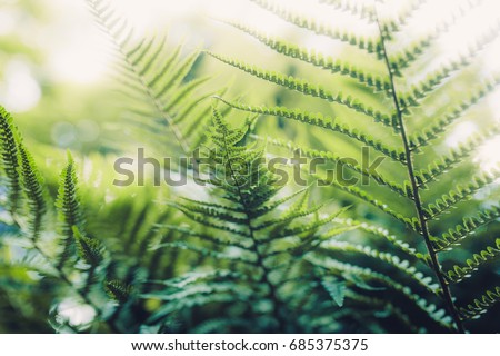 Texture of plants in summer #685375375