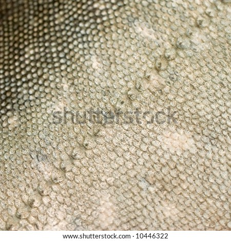 Fishscale Pattern – Compare Prices, Reviews and Buy at Nextag